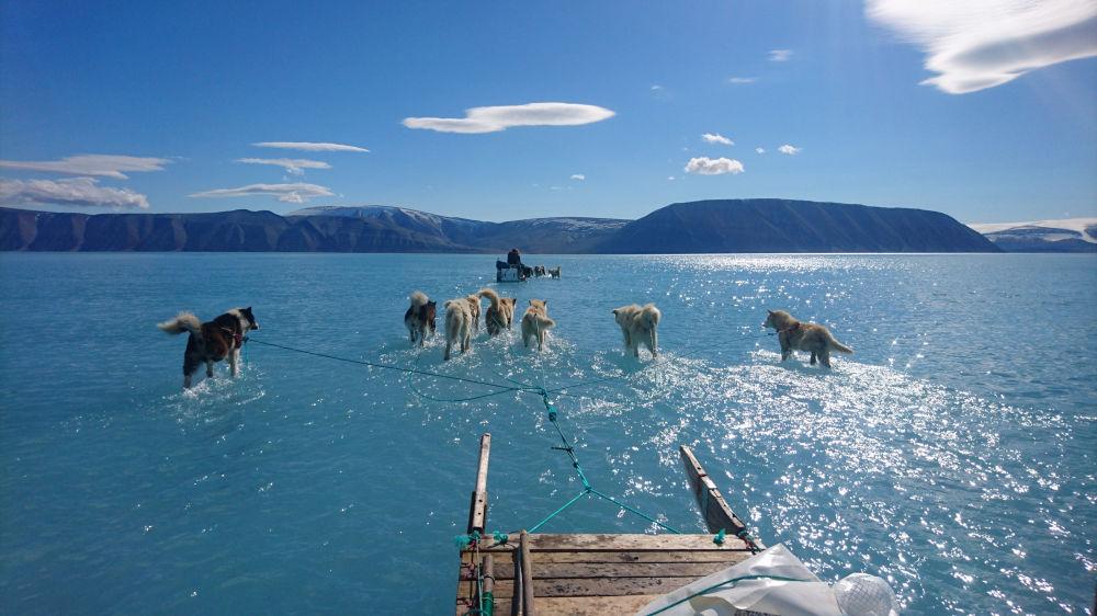 Una slitta trainata da cani sul ghiaccio ricoperto d'acqua in Groenlandia