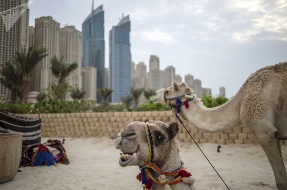6° posto: Dubai, Emirati Arabi Uniti