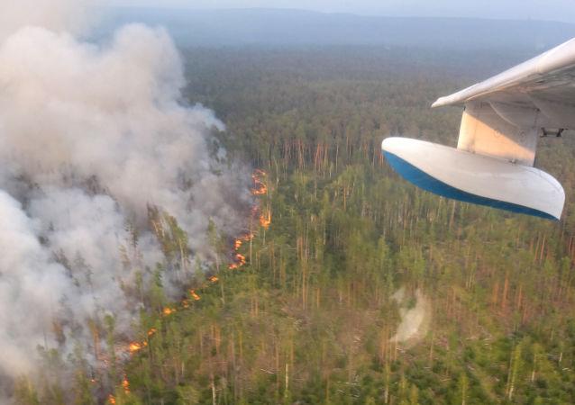 Incendi boschivi nel territorio di Krasnoyarsk