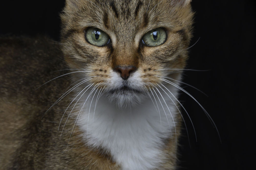 Zoe, la gatta randagio di 14 anni.