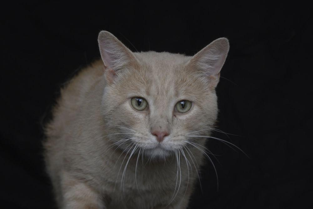 Anche il gatto Fibo ha 6 anni ed è in cerca di una casa.