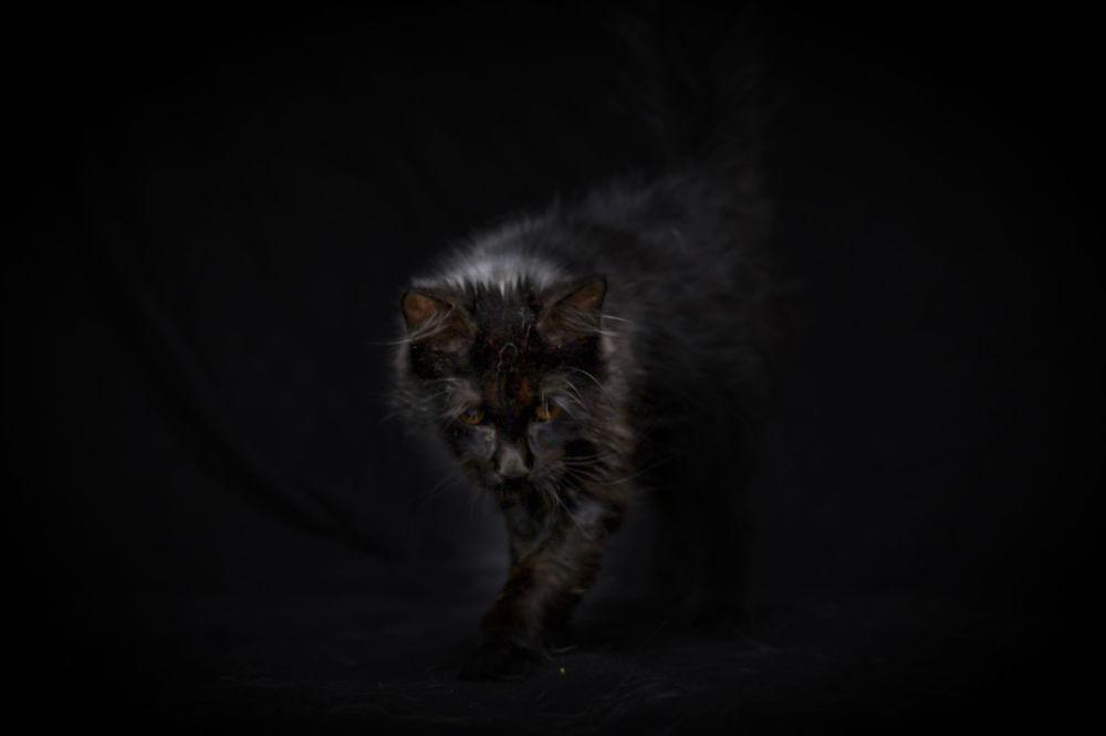 Il gattino cieco di 5 mesi Nuachea è finito sulla strada.