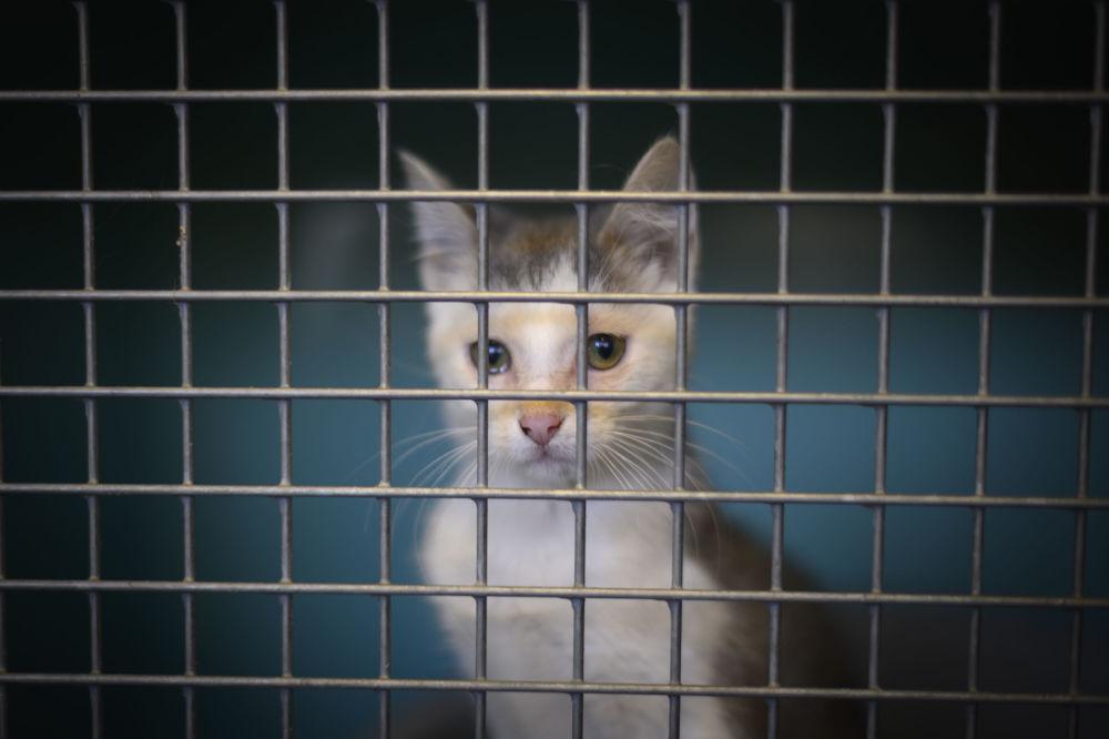 Il gattino abbandonato sulle strade di Parigi.