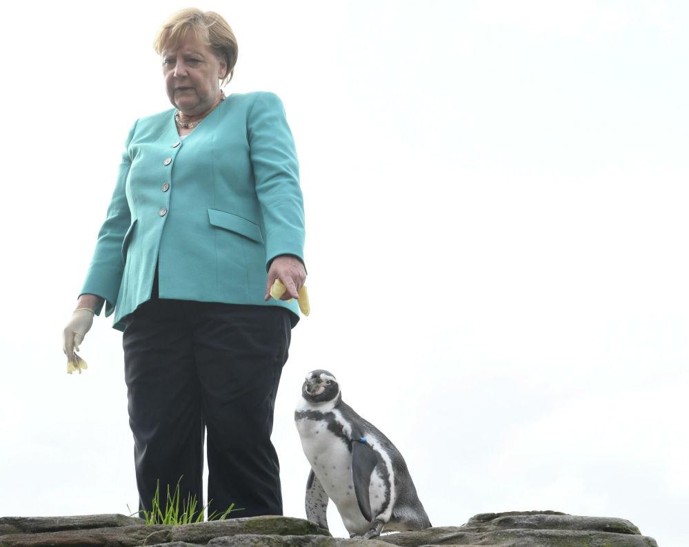 Il cancelliere tedesco Angela Merkel dà da mangiare ai pinguini nel villaggio di Stralsund, nel nord della Germania