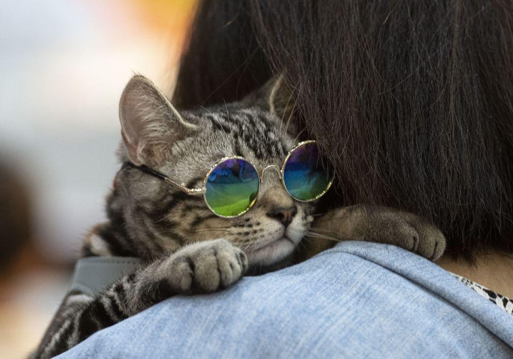 Un gatto con gli occhiali al Pet Expo Championship a Bangkok.