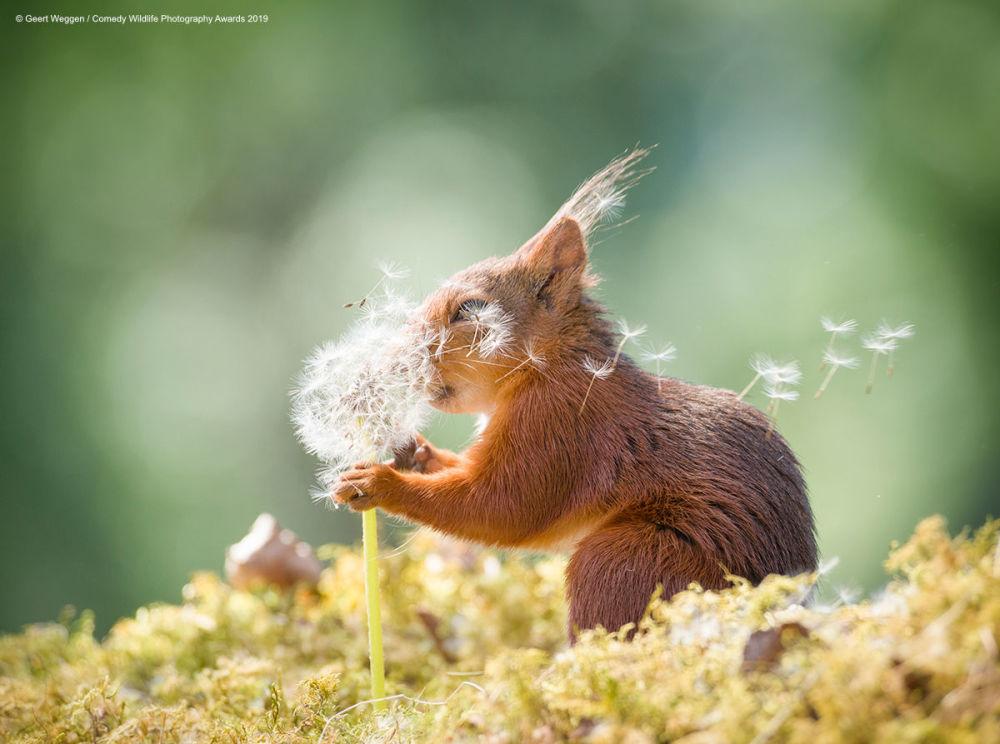 I desideri di uno scoiattolo ripresi da Geert Wegger, fotografo svedese.