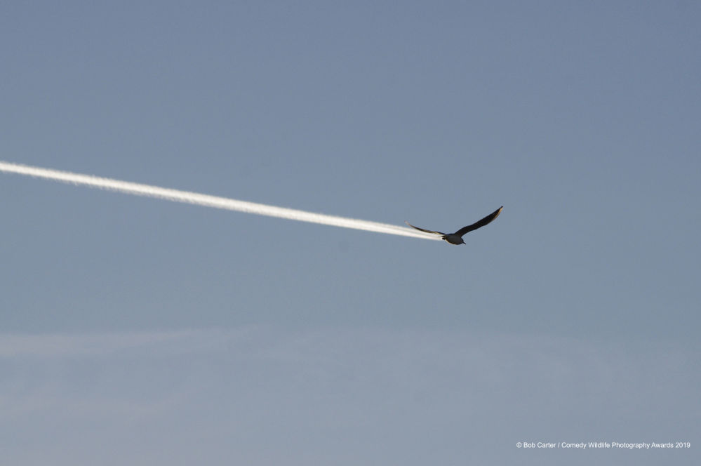 No, non è una aereo! È un uccello.