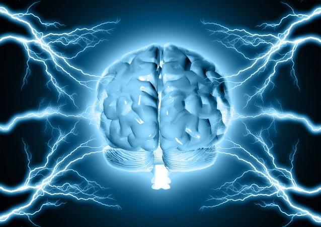 Un modello del cervello umano