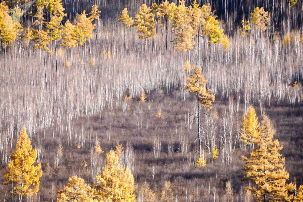 Bosco autunnale di Titovskaya Sopka nella Siberia meridionale, in Russia.