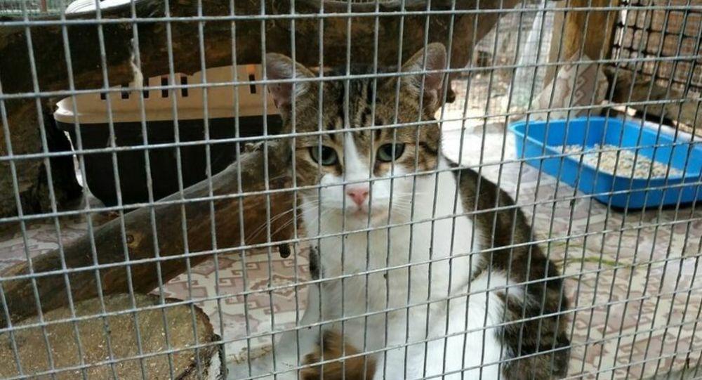 Il gatto-spacciatore