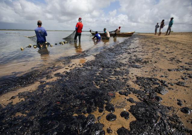 Pulizia delle spiagge chiazzate di petrolio in Brasile