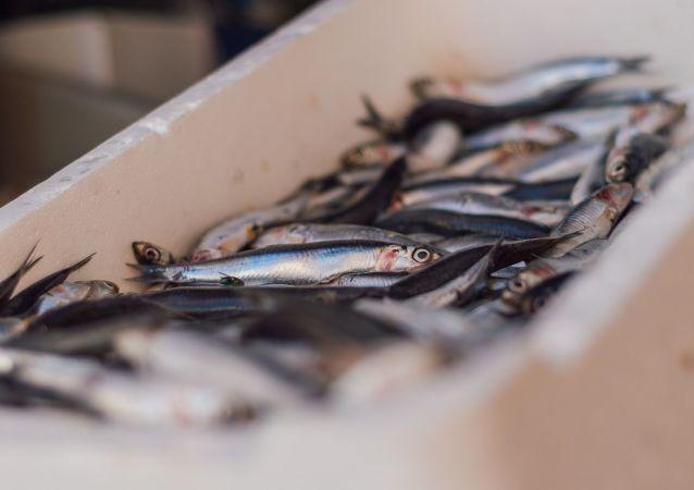 Sardine al mercato del pesce