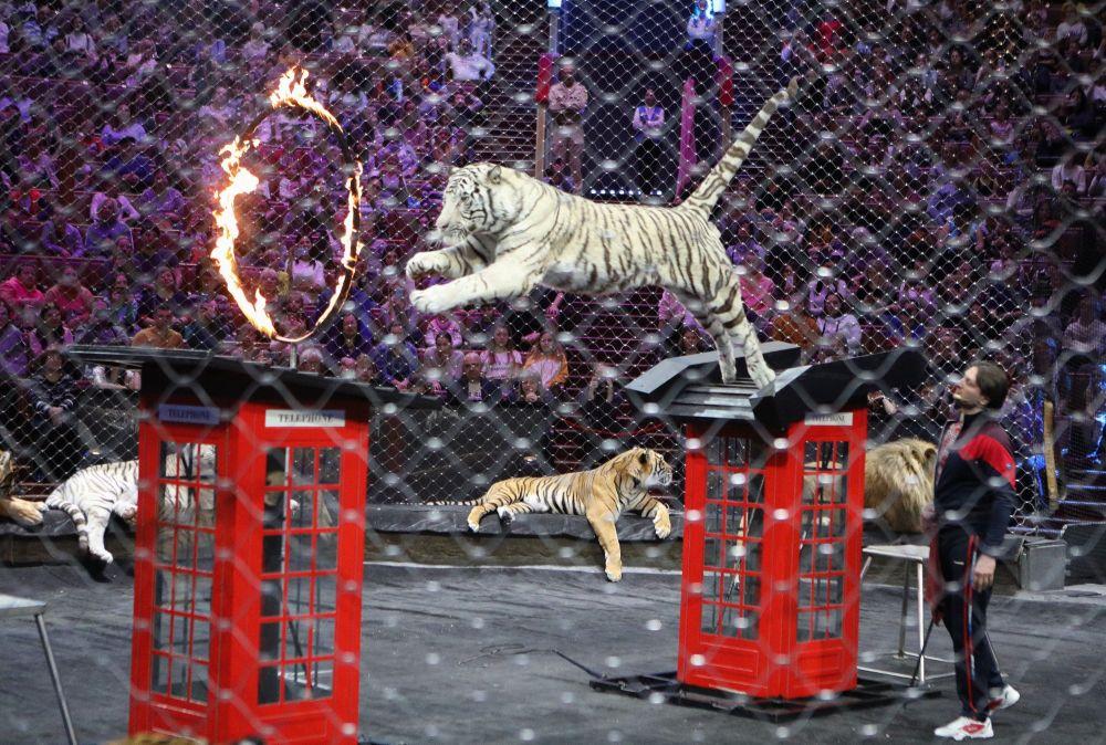 Dopo un lungo lavoro di rinnovamento il Gran Circo Statale di Mosca propone spettacoli circensi di altissima qualità