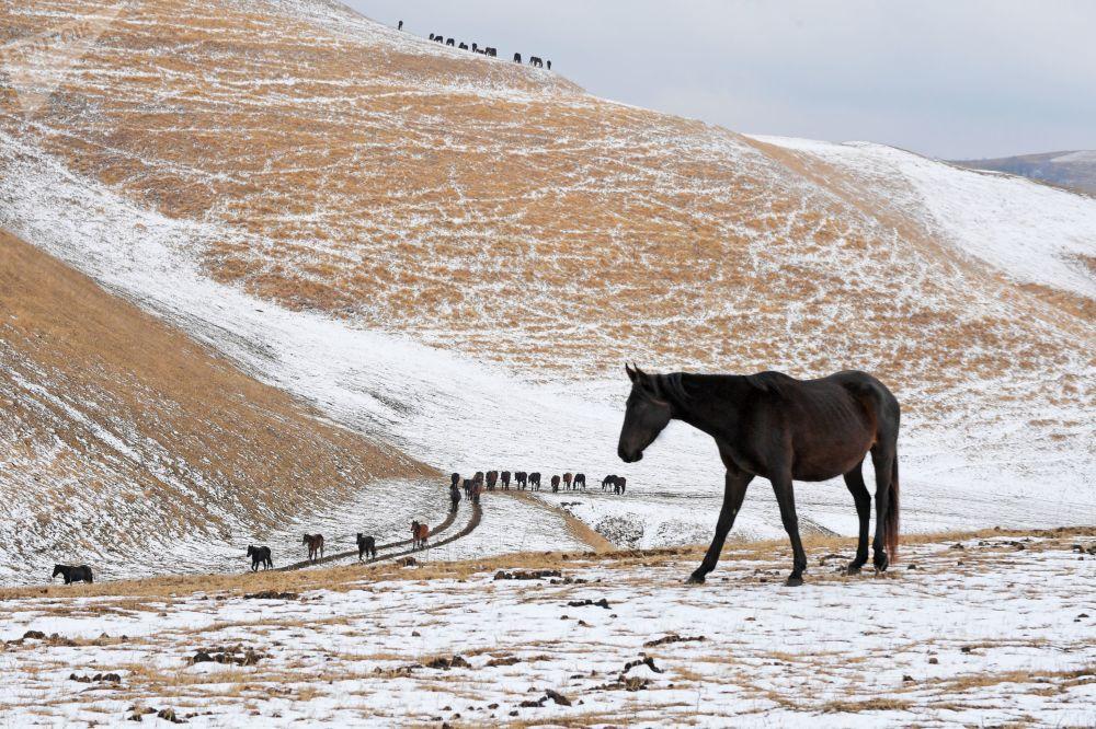 Cavalli nel villaggio di Krasny Kurgan in Russia.
