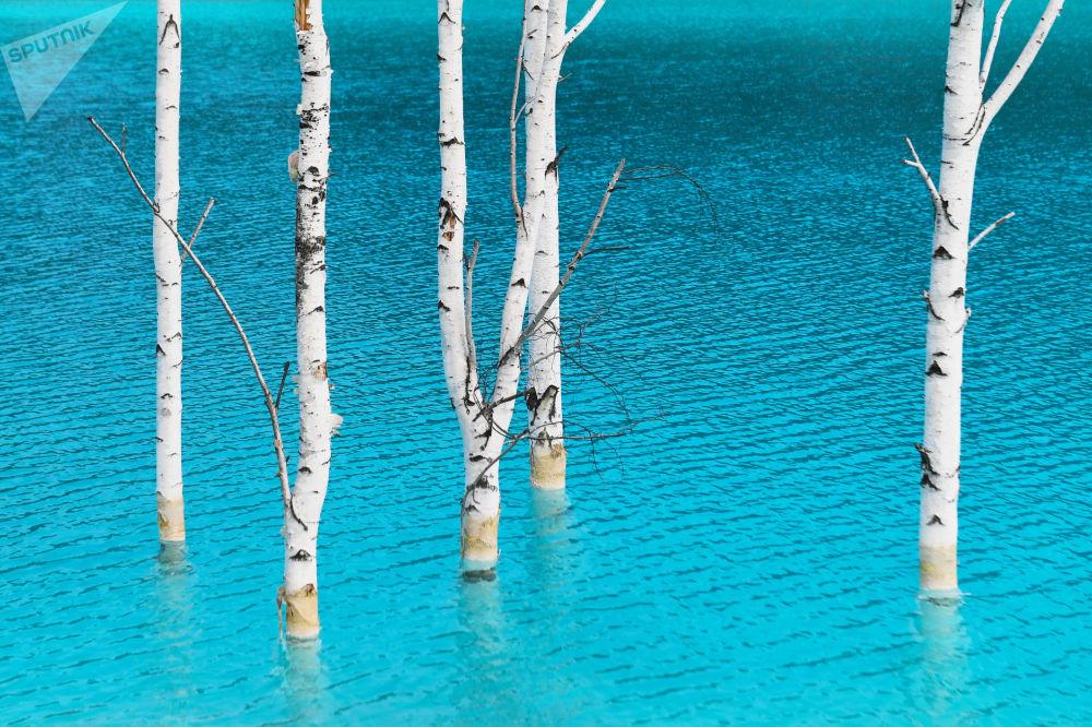 Il lago artificiale vicino alla centrale elettrica di Novosibirsk in Russia