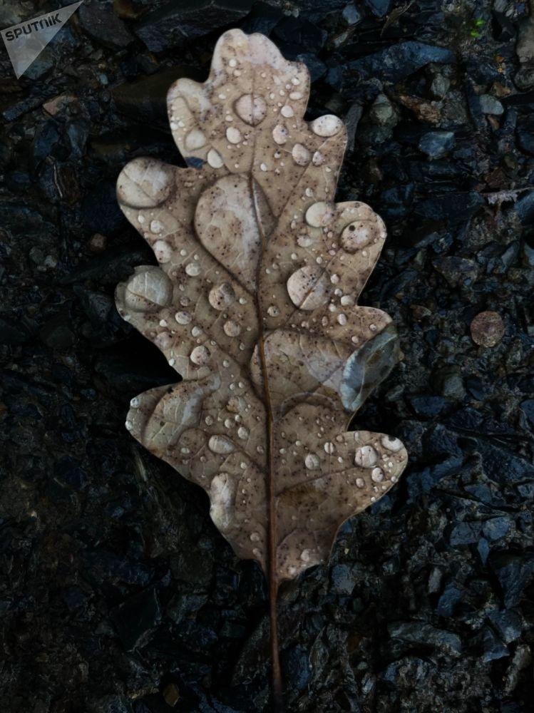 Una foglia di quercia in Crimea.