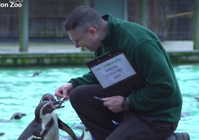 Inventario allo zoo di Londra