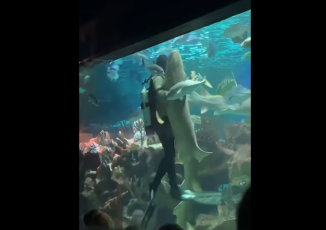 Uno squalo e un sub danzano