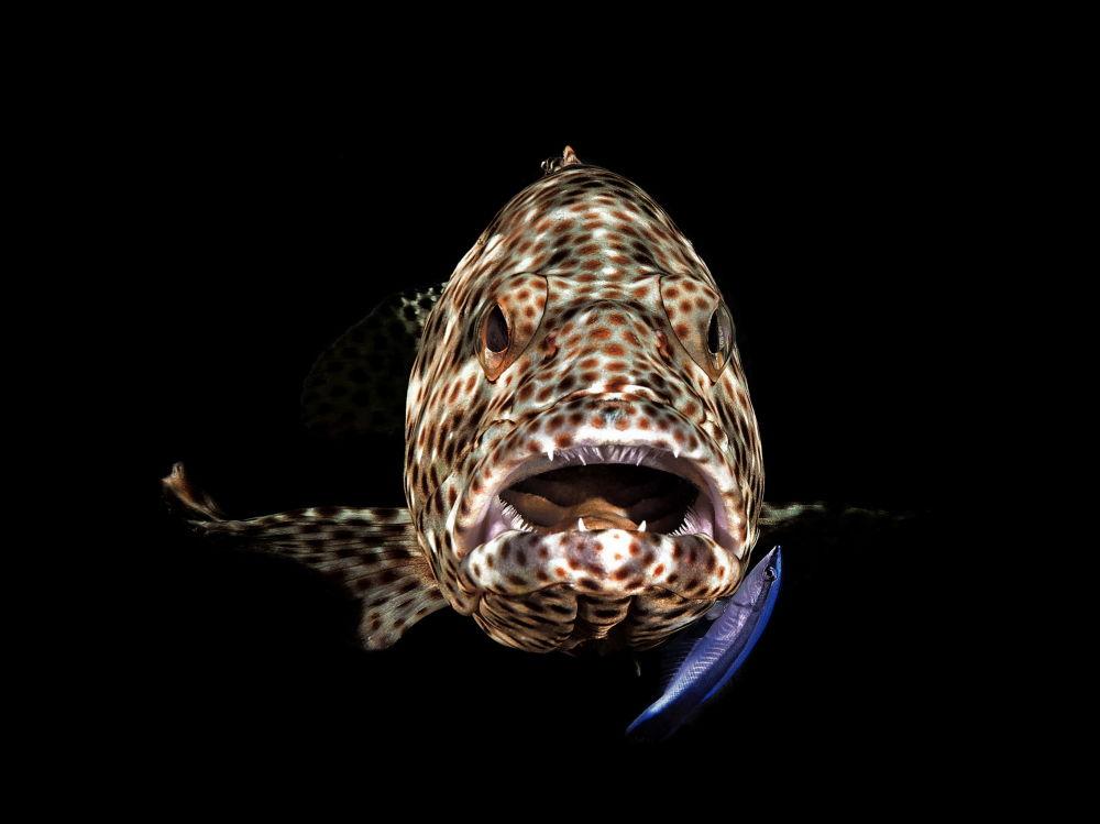La foto Open Mouth Grouper di Ferenc Lorincz.