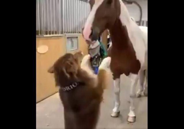 Lascia che la storia d'amicizia tra cane e cavallo ti sciolga il cuore