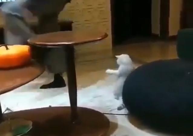 Un gatto che cerca di ballare fa ridere il web