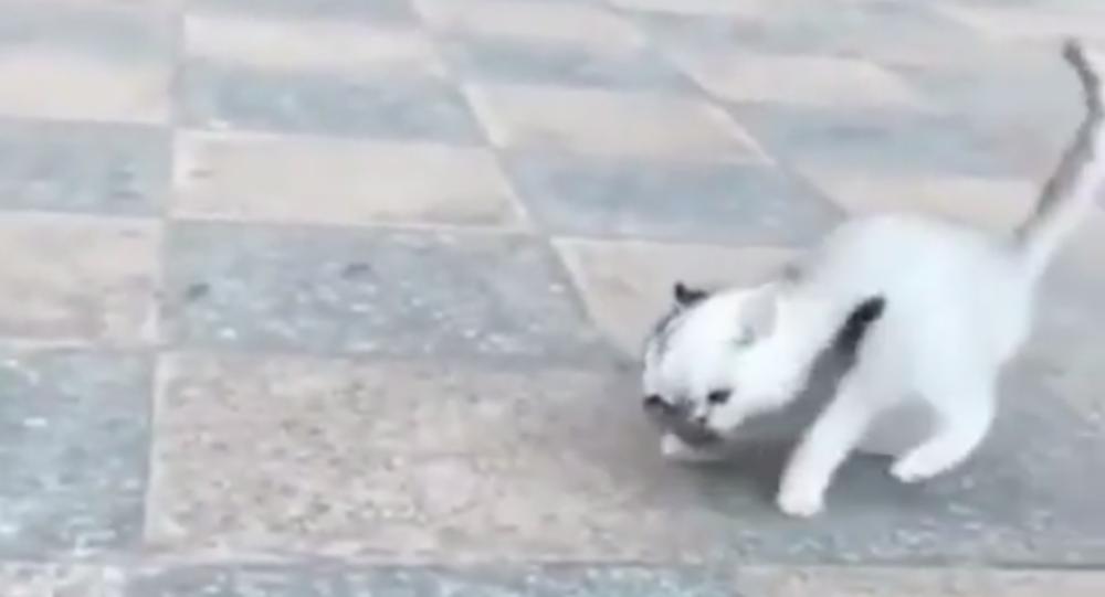 La lotta tra un gattino ed uno scoiattolo cowboy manda in delirio il web