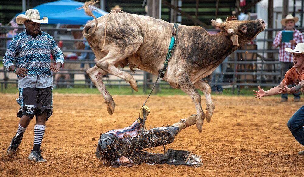 Un bue si libera del proprio fantino durante un rodeo God and Country a Thaxton, USA.