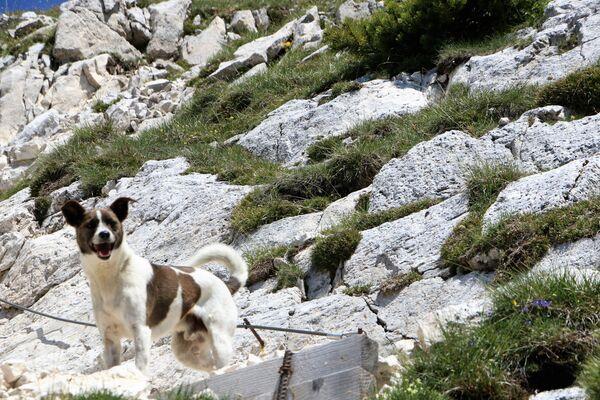 Un cucciolo felice in montagna - Sputnik Italia