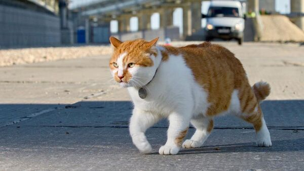 Кот по кличке Мостик - Sputnik Italia