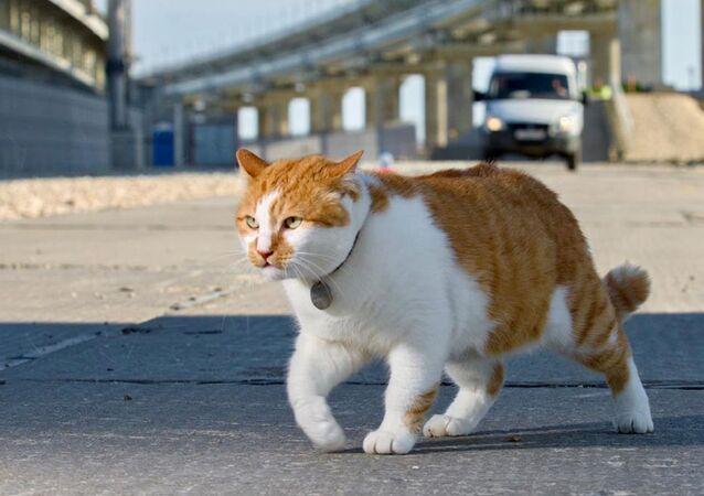 Il gatto-blogger Mostik, simbolo del Ponte di Crimea