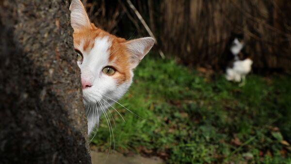 Gatto rosso - Sputnik Italia