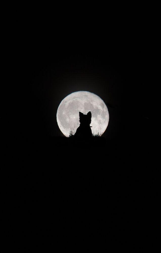 La foto Grande luna, piccolo lupo mannaro del fotografo britannico Kirsty Paton, Insight Investment Astronomy Photographer 2020