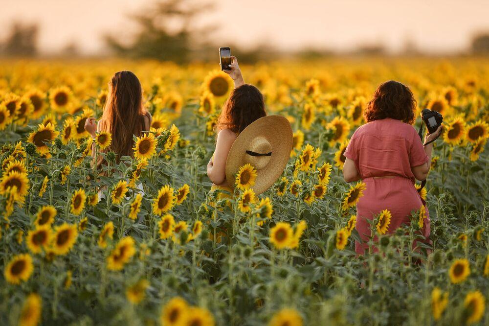Delle ragazze in un campo di girasoli in fioritura nei pressi di Sinferopoli, Crimea.