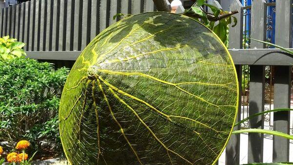 Un cappello a foglia di loto - Sputnik Italia
