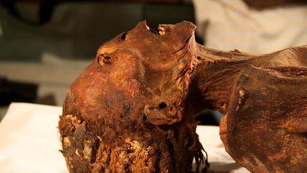 La mummia urlante egiziana - Sputnik Italia