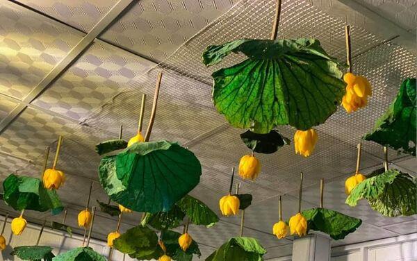 Prodotti fatti con foglie di loto - Sputnik Italia
