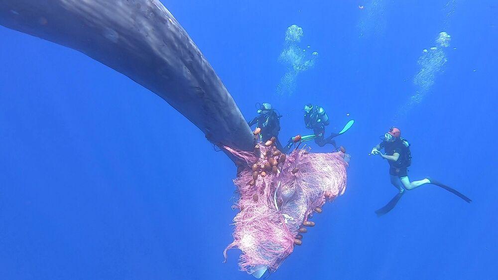 Un grosso cetaceo è rimasto impigliato ad una rete di pescatori abusivi al largo di Salina, isola siciliana dell'arcipelago delle Eolie. Guardia costiera, biologi e animalisti sono stati impegnati in una disperata corsa contro il tempo per liberarlo.
