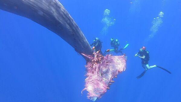 Un grosso cetaceo è rimasto impigliato ad una rete di pescatori abusivi al largo di Salina, isola siciliana dell'arcipelago delle Eolie. Guardia costiera, biologi e animalisti sono stati impegnati in una disperata corsa contro il tempo per liberarlo.  - Sputnik Italia