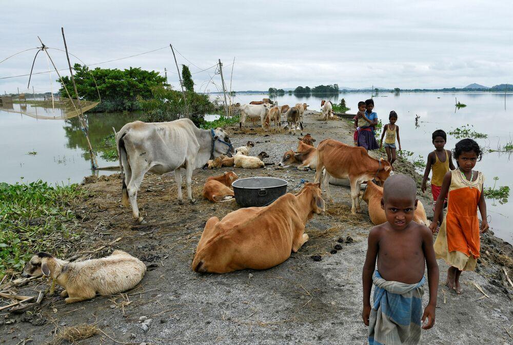 I bambini passano davanti al bestiame nel distretto di Morigaon, India, il 20 luglio 2020