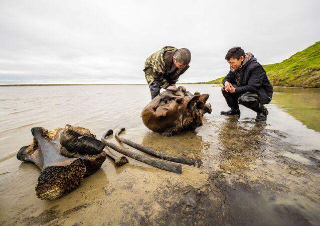 Mandriani di renne trovano fossili di mammut in un lago della Siberia occidentale