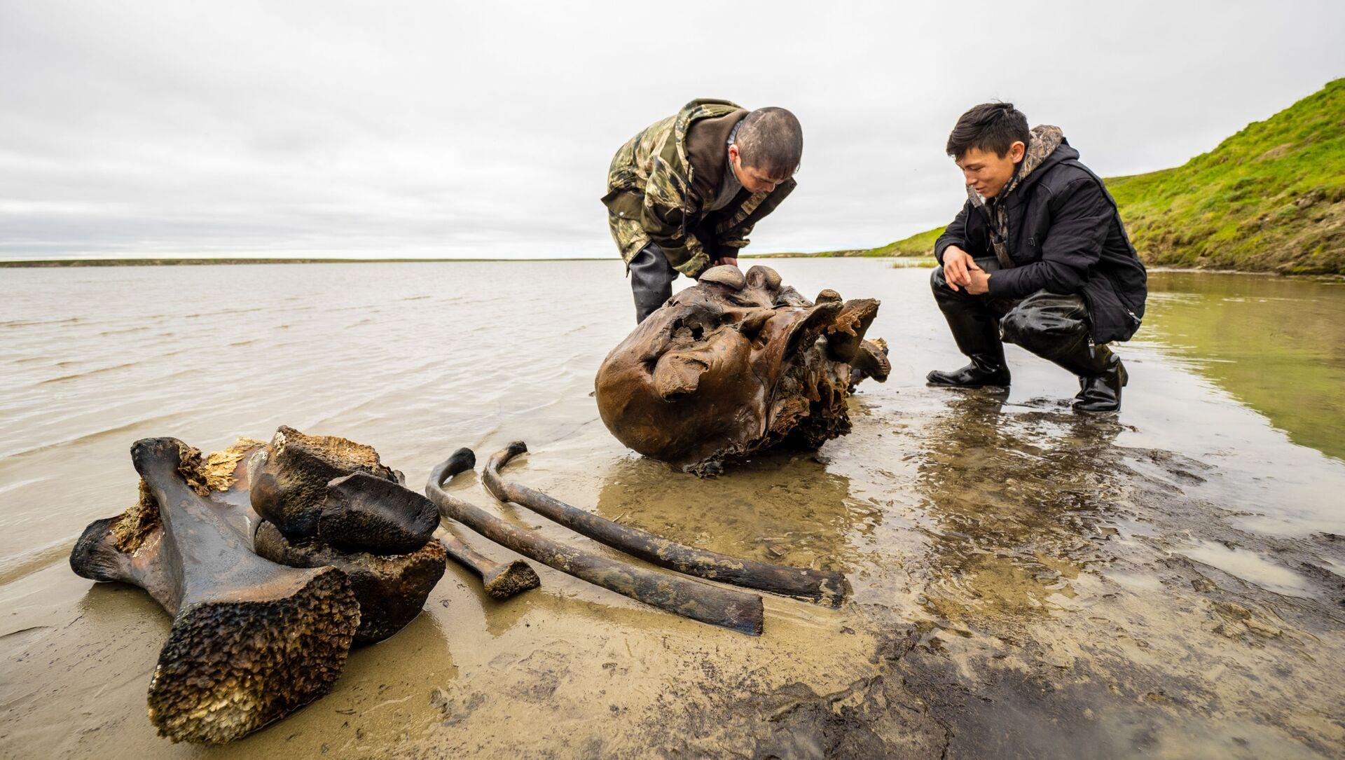 Mandriani di renne trovano fossili di mammut in un lago della Siberia occidentale - Sputnik Italia, 1920, 16.02.2021