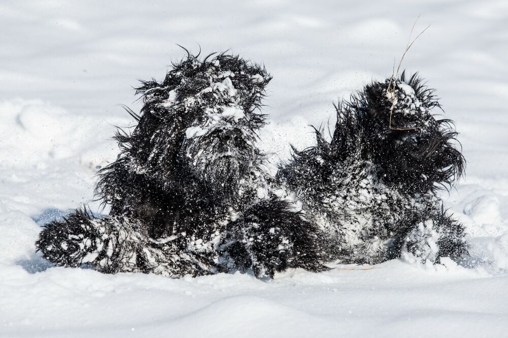 Mostro di neve della fotografa ceca Magdalena Strakova, Comedy Pet Photo Awards 2020