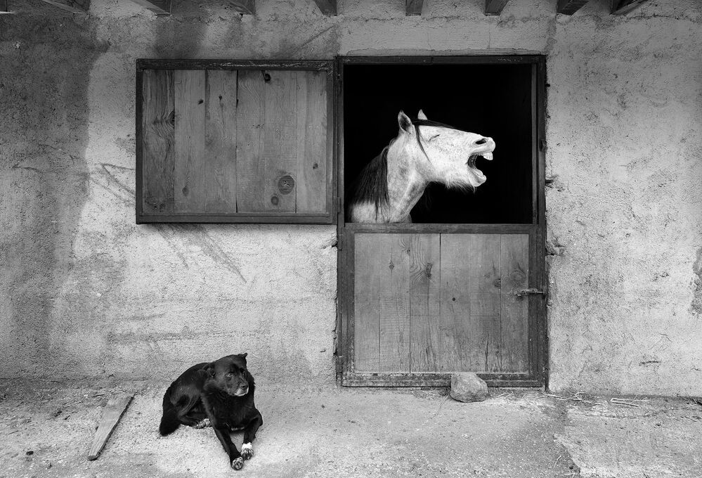 Il sorriso del fotografo turco Mehmet Aslan, Comedy Pet Photo Awards 2020
