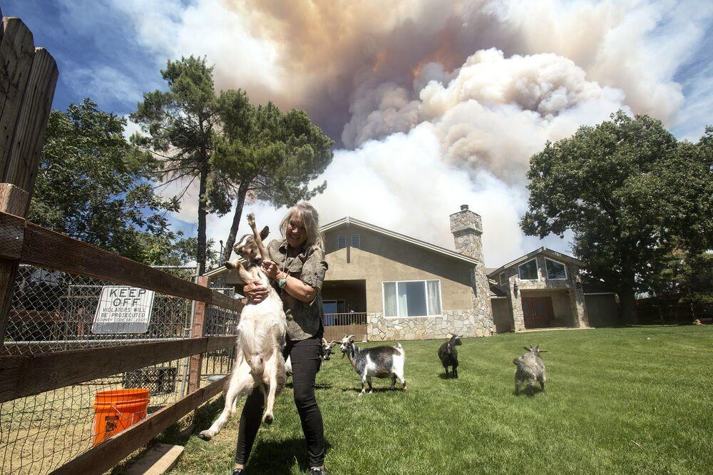 California, una donna salva le capre da un vasto incendio boschivo nel sud dello Stato