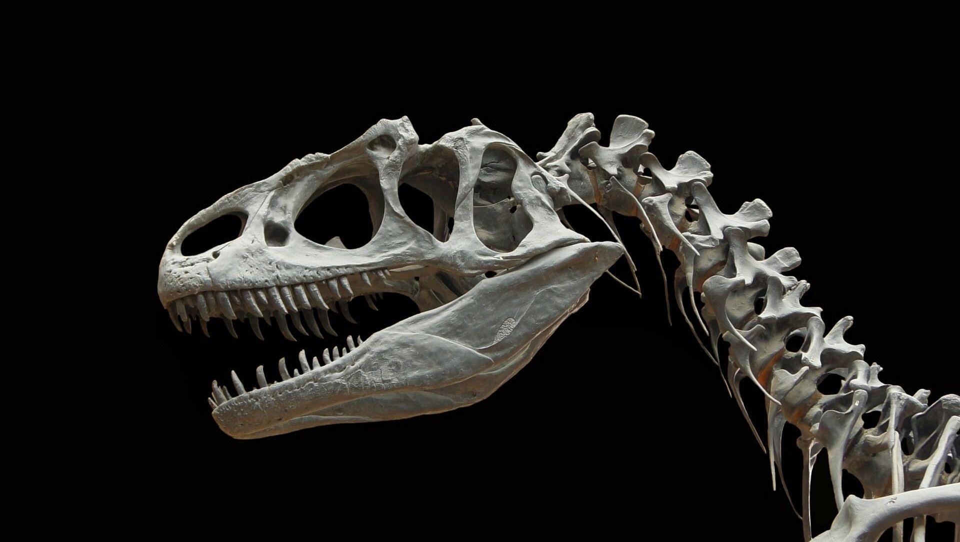 Fossile di dinosauro (immagine illustrativa) - Sputnik Italia, 1920, 13.03.2021