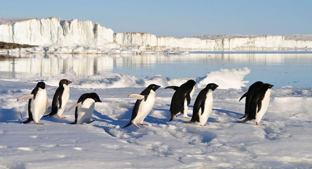 Pingüinos (imagen referencial)