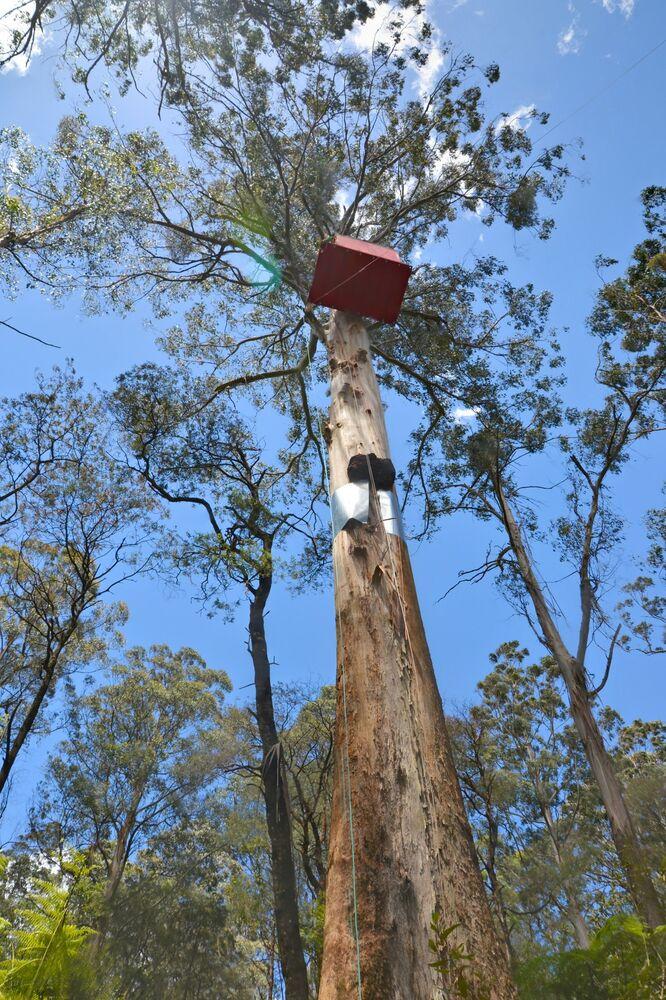 Una casa sull'albero nella riserva naturale di Toolangi in Australia.