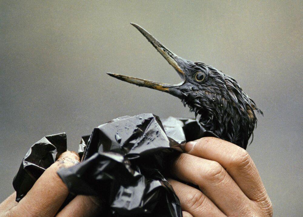 L'incidente sulla nave cisterna Exxon Valdez è avvenuto il 23 marzo 1989 al largo delle coste dell'Alaska. Come risultato del disastro, circa 10,8 milioni di galloni di petrolio si sono riversati in mare.