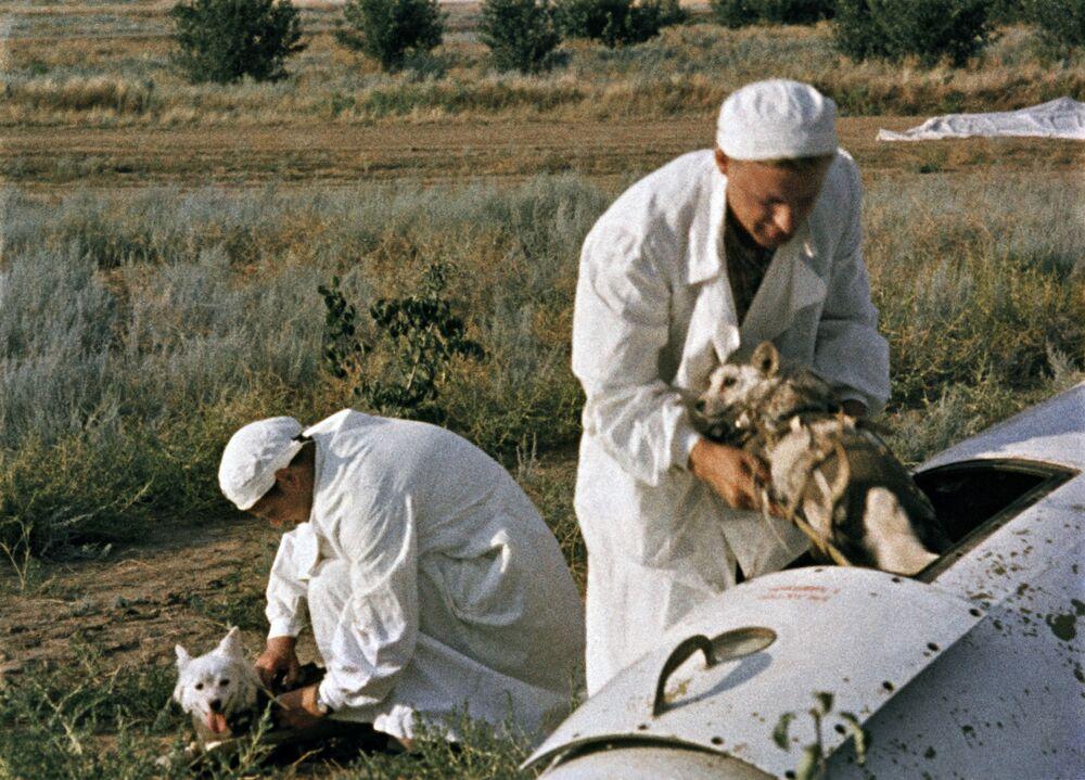 I medici tirano fuori i cani dopo il test dalla cabina del razzo.