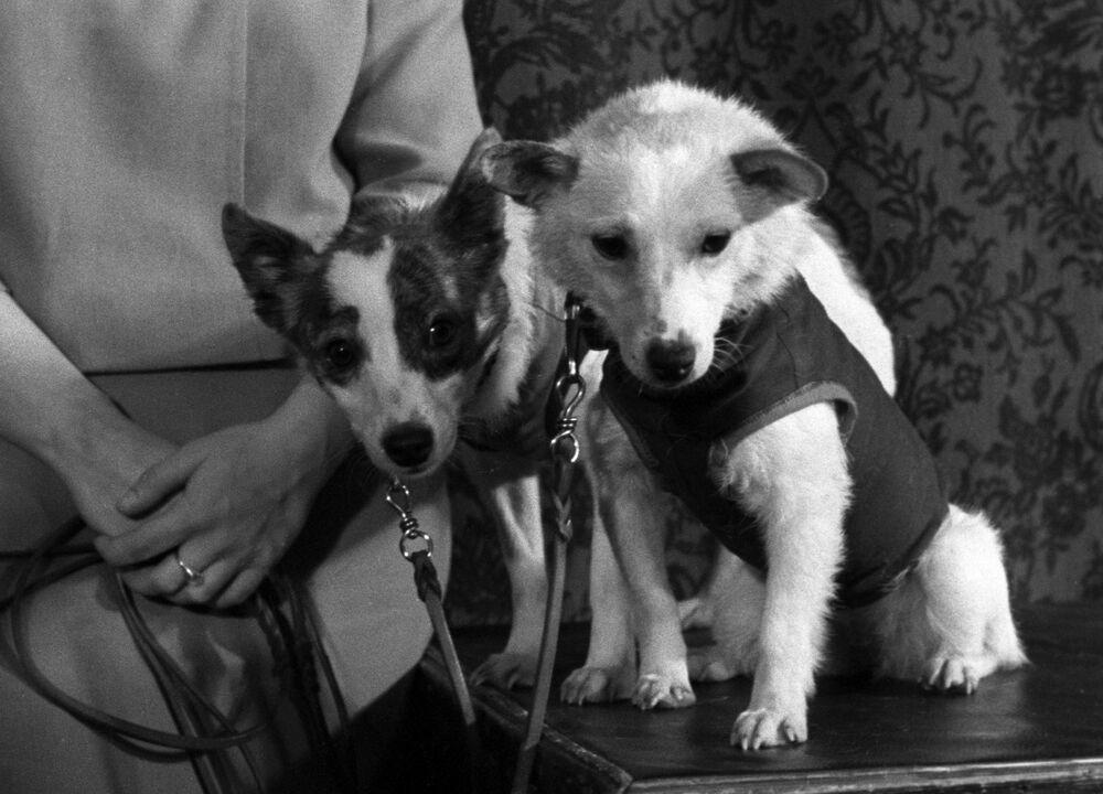 Belka e Strelka, 1960. Immagine dal film-documentario sovietico Terra-Spazio-Terra.